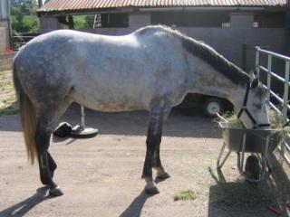 case3_horse