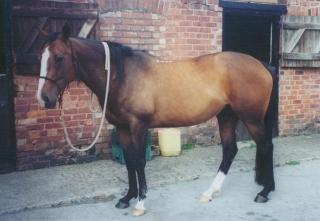 case2_horse